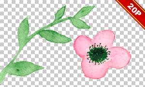 夏日花朵绿叶水彩创意免抠素材集V05