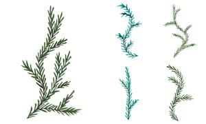 水彩效果松树枝等主题矢量素材V02