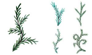 水彩效果松树枝等主题矢量素材V03
