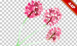 水彩样式花朵绿叶主题免抠图片素材