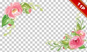 红色花朵与绿叶等元素免抠图片素材