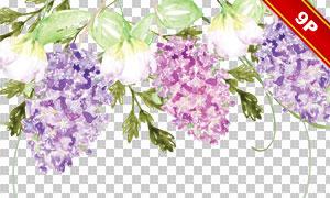绣球花等水彩花朵元素免抠图片素材