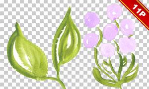 藤蔓与鲜花叶子等元素免抠图片素材