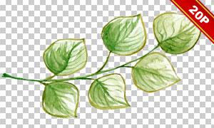绿叶与线描花朵等元素免抠图片素材