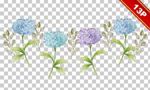 水彩风格花朵透明背景免抠图片素材