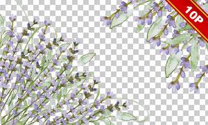 薰衣草与蝴蝶水彩元素免抠图片素材