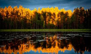 秋季湖边树木美丽的倒影摄影图片