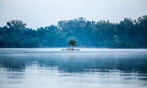 细雨中湖中树木美景摄影图片