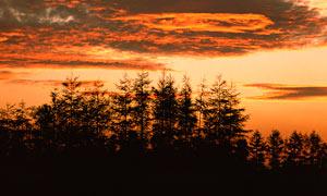 黄昏下美丽的树木剪影摄影图片