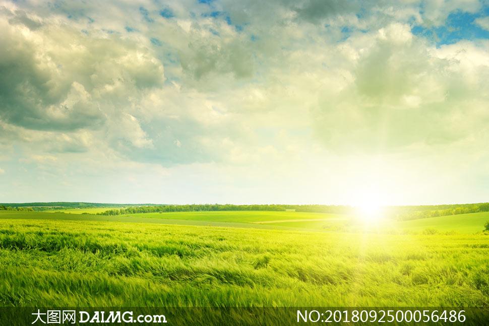 关 键 词: 农田农作物麦田绿色农田田园风光阳光光芒四射天空云彩云朵