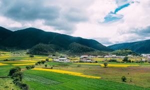 香格里拉村庄和农田摄影图片