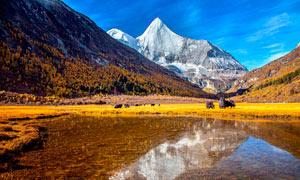 雪山脚下高清湖泊摄影图片