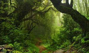 人迹罕至原始森林自然风景高清图片