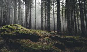树木与长满青苔的岩石摄影高清图片