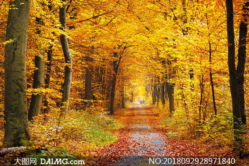 素材信息          透射进树林的光线风景摄影高清图片         阳光