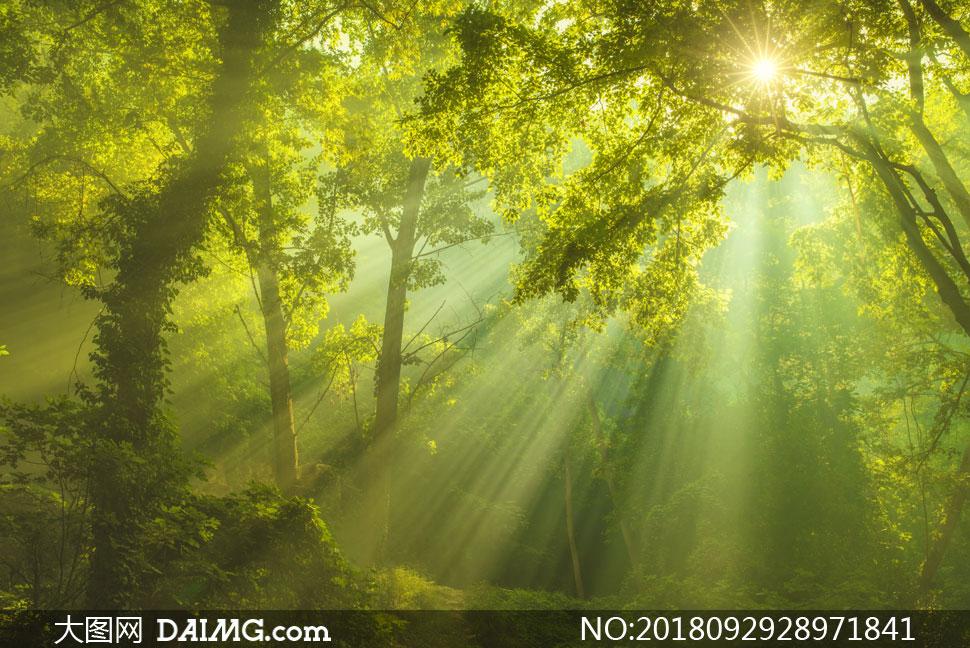 关 键 词: 高清图片大图图片摄影自然风景风光大树树木树林林间阳光