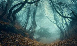 浓雾弥漫着的树林风光摄影高清图片