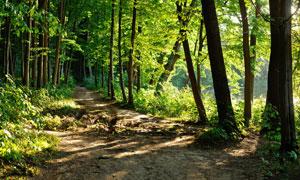 在湖边的树林小路风光摄影高清图片