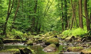 气候潮湿树林自然风光摄影高清图片