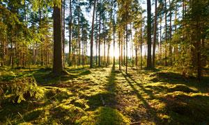 早晨耀眼阳光中的树林摄影高清图片
