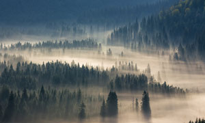 被沙尘侵袭的树林植被摄影高清图片