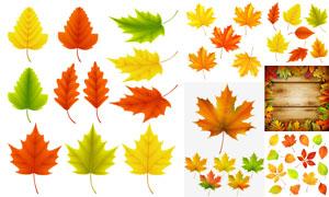木板与秋天的树叶主题创意矢量素材