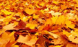 秋天落满了树叶的地上摄影高清图片
