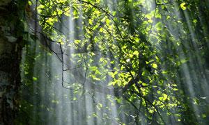 有阳光照射进来的树林摄影高清图片