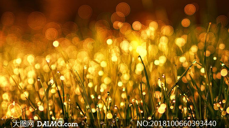 挂着水珠的杂草丛梦幻效果高清图片
