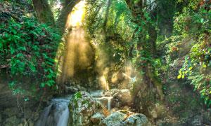 山间树林流水自然风光摄影高清图片