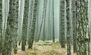 薄雾笼罩中的树林风景摄影高清图片