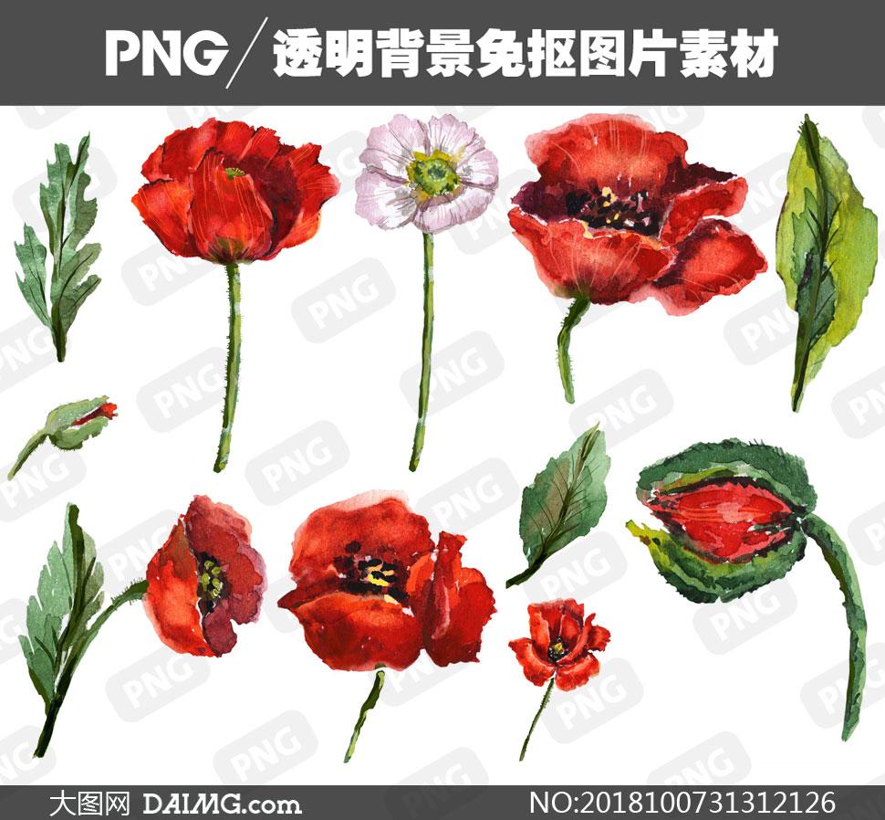 手绘水彩绿叶与罂粟花主题免抠素材