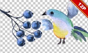 小鸟树叶与蓝莓等水彩免抠图片素材