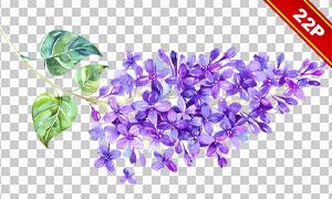 水彩丁香花与绿叶元素免抠图片素材