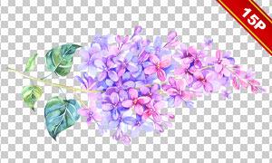 精美花卉植物主题创意免抠图片素材