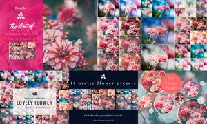 14款花朵照片后期美化LR预设