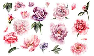 水彩效果的绿叶玫瑰花创意矢量素材
