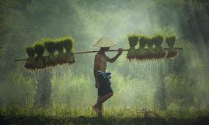 行走在田间地头的农民摄影高清图片