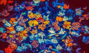 水面上绚丽缤纷的树叶摄影高清图片