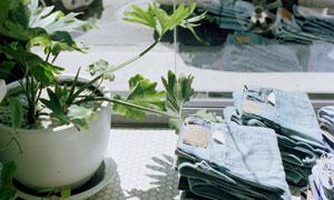 绿植与叠放好的牛仔裤摄影高清图片