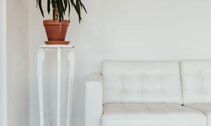 沙发与在角落里的绿植摄影高清图片