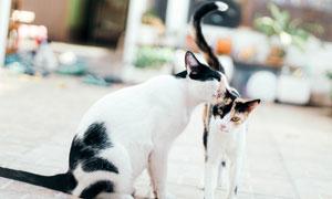 身上有黑白花色的猫咪摄影高清图片
