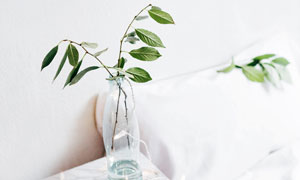 床头在玻璃瓶中的绿叶装饰高清图片