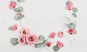 花朵与尤加利叶组成的边框高清图片