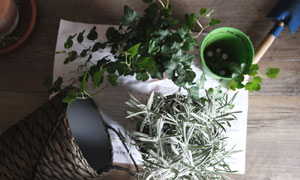 篮筐枝叶与园艺工具等摄影高清图片