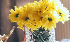 玻璃材质瓶中的小菊花摄影高清图片