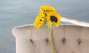 沙发上的三朵葵花特写摄影高清图片
