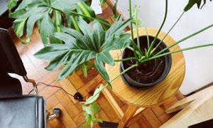 椅子与室内植物等特写摄影高清图片
