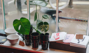 窗台上的绿色植物特写摄影高清图片