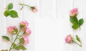 绿叶与粉色玫瑰花特写摄影高清图片